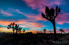 An incredible sunset over Joshua Tree this weekend, during my Joshua Tree Weekend Photography Workshop - #photography #sunset - http://OnealPhotographicWorkshops.com