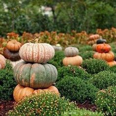 Stacked pumpkins in the garden Pumpkin Garden, Pumpkin Farm, Autumn Garden, Happy Fall Y'all, Autumn Day, Autumn Leaves, Winter, Autumn Inspiration, Story Inspiration