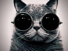 «O Sucesso não deve ser perseguido, deve ser atraído pela pessoa em que te transformas» A Nossa vida, é do formato e da cor dos óculos através dos quais a escolhemos ver. (...)  Lê o artigo aqui: http://www.oliviercorreia.com/blog/a-sementeira-do-sucesso