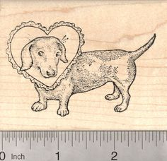 Weiner Dog Shaped as a Letter D Dachshund Rubber Stamp Light Coat G25707 WM