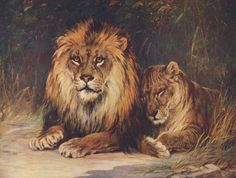 The Wonder Book of Animals (15th ed) - Harry Morley (1881-1943), Lions. #vintage, #animals, #panthera leo