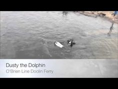 Dusty The Doolin Dolphin - YouTube