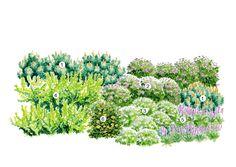 Kuvahaun tulos haulle rinnepuutarhan kasvit