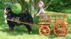 Koda and I need to cart!
