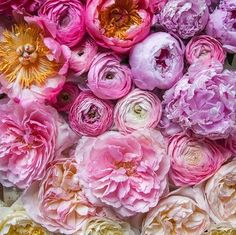 Wallpaper Flowers Rose Floral 15 Ideas For 2019 Bulb Flowers, My Flower, Fresh Flowers, Beautiful Flowers, Spring Flowers, Peony Flower, Cactus Flower, Exotic Flowers, Gardens