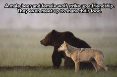 This reminds me of a book called wolves of the beyond folona and thunderheart