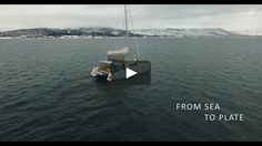 From Sea to Plate on Vimeo