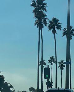 Bel Air, West Coast, Palm Trees, Utility Pole, Ocean, Happy Things, Instagram, Blue Jeans, Guns