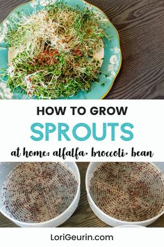 Learn how to grow sprouts from home in this quick and easy tutorial and video. Sprouts are fun and easy to grow and so nutritious to eat. You can grow broccoli, mung bean, alfalfa, and other types of sprouts using trays or Mason jars.    #howtogrowsprouts #sprouts #broccolisprouts #growsproutsindoors #growsproutsinatray #microgreens Alfalfa Seed, Alfalfa Sprouts, Broccoli Sprouts, Hobbies To Try, Hobbies That Make Money, Diy Crafts And Hobbies, Growing Sprouts, Good Sources Of Calcium