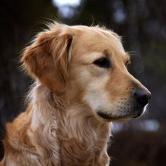 Hypoallergenic Dog Breeds For Backpacking