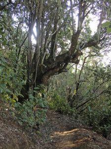 Schöne Bäume und Ausblicke auf dem Wanderweg Ruta del agua