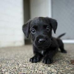 Cute puppy ..