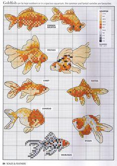 золотые рыбы минисхема
