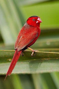 Hermosa ave...