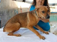 ACE Animal Care España - Martin, our 13 year old oldie, Corina, our Dachshund and Sixto.......