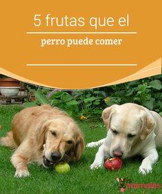 5 frutas que el perro puede comer - Mis animales Hay algunas frutas que el perro puede comer, y que además podrían llegar a acelerar la absorción de nutrientes importantes en su dieta, te decimos cuales: