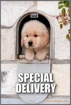 Can that pop up in my mailbox please it is so cute