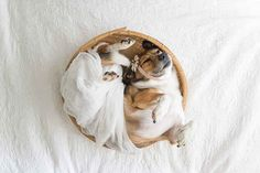 A Baby Photographer Did A Cliché Newborn Photoshoot Starring A Dog And It's The Cutest