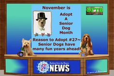 BFTB NETWoof News for November 3, 2014 by mkclinton.com #news #dogs #Bassethound #Westie