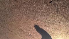 Peter Brings the Shadow to Life by Joe Pease