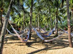 Hammock Island at Xel-Ha Park