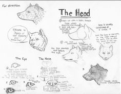 how to draw wolves | Gallery of How to Draw a Wolf