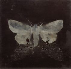 "thunderstruck9: ""Magnus Thorén (Swedish, b. 1974), moth on moth, 2015. Oil on wood, 35 x 35 cm. """