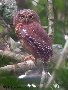 "Owls are very interesting ! If you want to learn more read "" Wesley the Owl"" the story of a lab tech who raises an orphaned owl. Owl Photos, Owl Pictures, Beautiful Owl, Animals Beautiful, Animals And Pets, Cute Animals, Animal Crackers, Owl Bird, Mundo Animal"