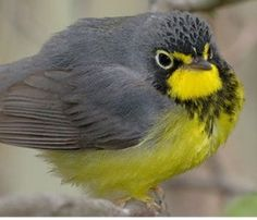 Save Thousands of Birds from Fatal Collisions