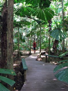 Fan Palms (Licuala ramsayi) Cape Tribulation Australia - Part of the Fan Palm Boardwalk | Flickr - Photo Sharing!