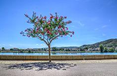 France, Tree, Boulevard, Road, Travel, Green #france, #tree, #boulevard, #road, #travel, #green