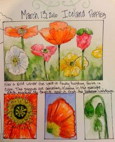 Sketching in Nature: Poppies are bloomin'