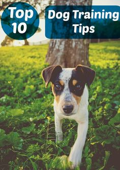 Did you adopt a dog lately and want to learn some training tips? Read the following training tips below and share with us yours. Those are my top 10 dog training tips. Do you have any other training …