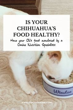 Don't take chances with your Chihuahua's health! Have their diet evaluated by a Canine Nutrition Specialists! #chihuahuaallergies, #chihuahuahealthtips, #chihuahuahealthtreatments, #chihuahuahealthissues, #chihuahuahealth, #chihuahuahealthproblems, #chihuahuafacts, #chihuahuacare, #chihuahualifestyle, #chihuahuahelp, #chihuahuaarticles, #chihuahuawebsite, #chihuahuablog Chihuahua Facts, Living A Healthy Life, Proper Nutrition, Dog Bowls, Healthy Recipes, Blog, Healthy Eating Recipes, Blogging, Healthy Food Recipes