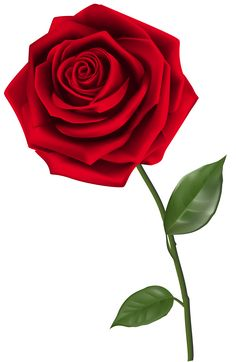 Single Red Rose PNG Clipart Image