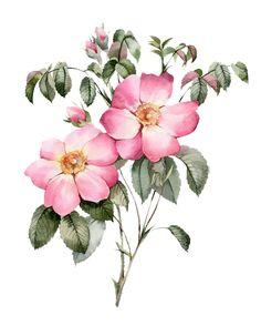 Framed Art, Wall Art, Free Canvas, Birth Flowers, Floral Prints, Art Prints, Bunch Of Flowers, Botanical Flowers, Botanical Illustration