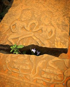 """""""As someone says, """"Life finds a way"""". - - - #travel #travelphotography #travelgram #traveling #traveldiaries #travelawesome #traveladdict #travelphoto #travellife #travelpics #travelblog #travels #travelingram #voyage #trip #tree #trees #green #naturelovers #naturephotography #AngkorThom #bayontemple #basrelief #cambodia #cambodge #jurassicpark #drianmalcolm #ianmalcolm #flowers"""" by (yaya.yamamoto). travels #naturephotography #ianmalcolm #travelphotography #traveladdict #travelphoto…"""