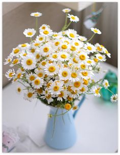 Daisies in a blue milk maid jug