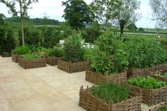 Organically Grown Willow, living structures, rods, cuttings etc - WOVEN WILLOW RAISED BEDS