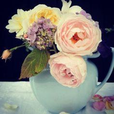 Scepter D'Isle and  Crocus Rose Austin roses