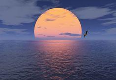 Sonne Meer und Möwe - Richard Bach - Wikiquote