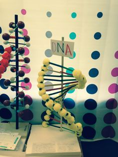 how to make a dna model stand up