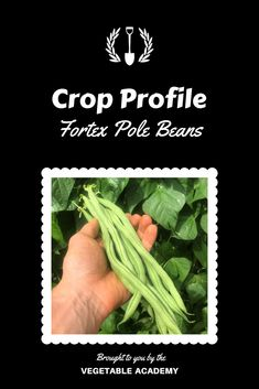 """See what we love about growing these Fortex pole beans.  Head to our online Classroom to see the full Crop Profile including general characteristic, strengths, weaknesses, bed spacing, and specific yield records.  Just type """"Fortex"""" in the Classroom search bar and the post will pop right up for you. Online Classroom, Gardening Tips, Beans, Profile, Pop, Vegetables, Search, User Profile, Popular"""