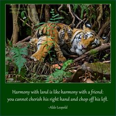 Harmony is about integrity and balance 💕💖✨ Aldo Leopold, Integrity, Live, Foundation, Animals, Animales, Data Integrity, Animaux, Animal