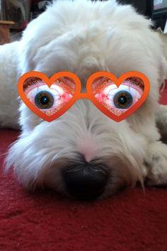 Gogley eyed Harvey