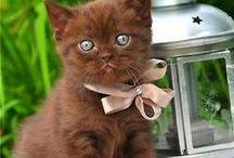 sweet little cats