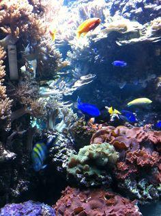 Amazing Berlin Zoo Aquarium