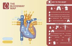 Here's a simple infographic for bloodflow traffic in the heart.