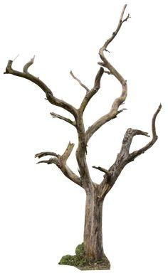 Dead Tree 04 by gd08.deviantart.com on @deviantART