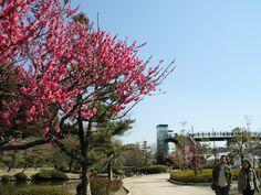【Ibaraki Pref.】Kairakuen.there is one of Japan's three most beautiful gardens!